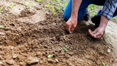 Photo of Antidepresiva v půdě aneb proč nás práce s půdou dělá šťastnějšími