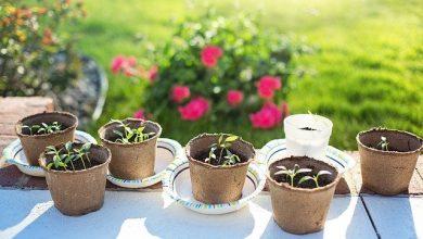 Photo of Rostlinné klíčky – zdroj vitamínů, enzymů a živé energie